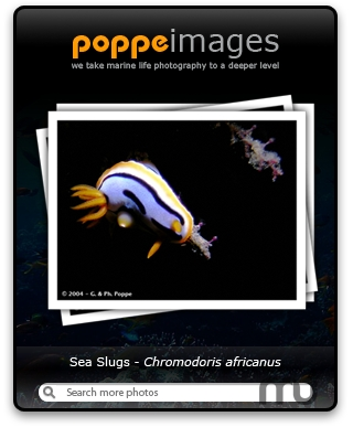 Screenshot 1 for PoppeImages Widget