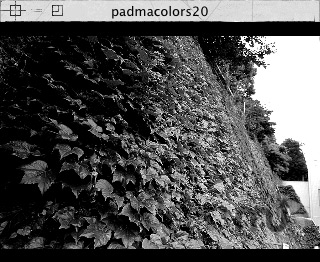 Screenshot 1 for padmacolors20