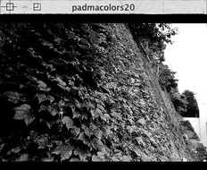 Screenshot 2 for padmacolors20