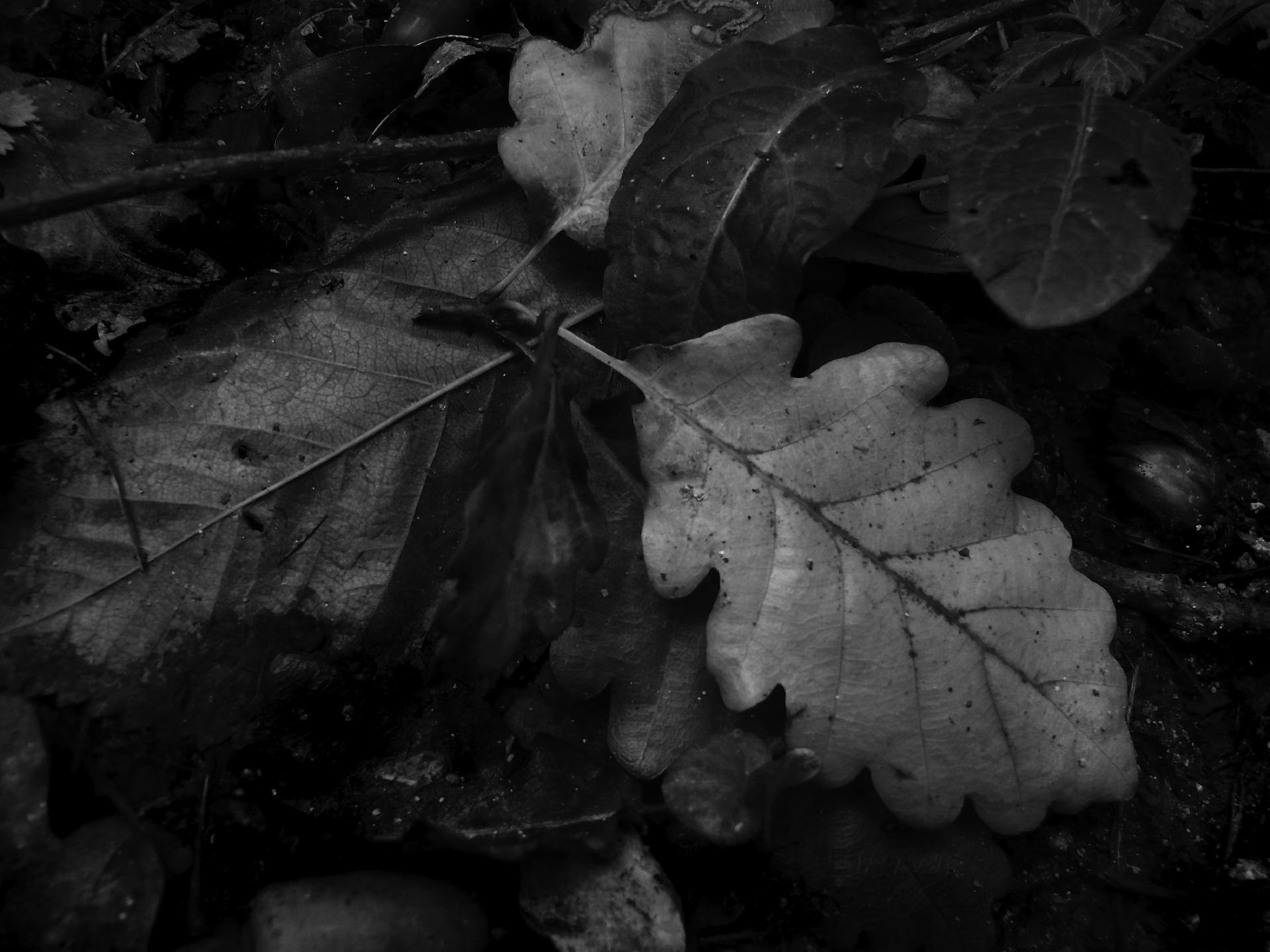 Screenshot 1 for Autumn Leaves ScreenSaver