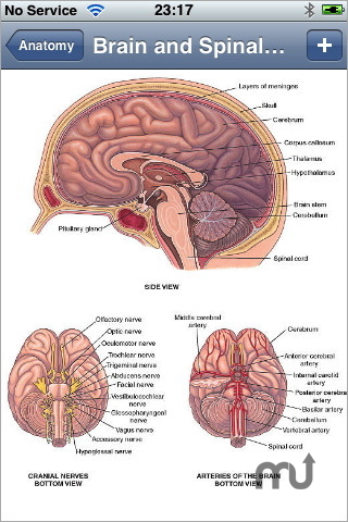 Screenshot 1 for Anatomy Atlas