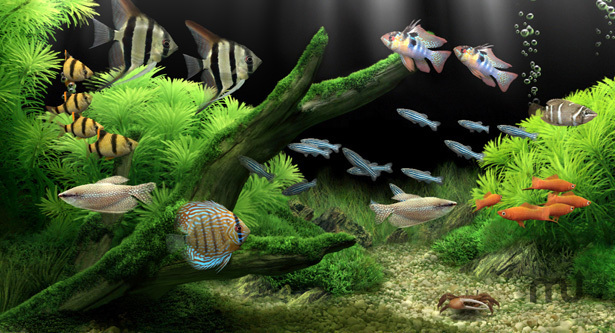 Screenshot 1 for Dream Aquarium